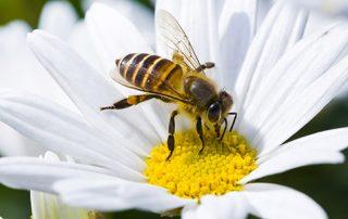 Orlando Bee Removal